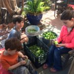 It's a family affair! Check out the kids doing their part with the tomatillos!